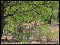 The female glancing back after the male was startled by a dumb human getting out of his vehicle