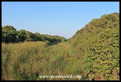The reed-grown Siyayi River