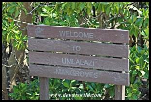 Welcome to Umlalazi Mangroves