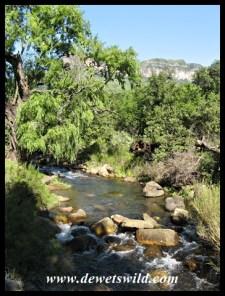 Crystal clear mountain streams
