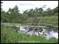 Lily Dam Hide in Loskop Dam Nature Reserve