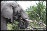 Elephant breakfast
