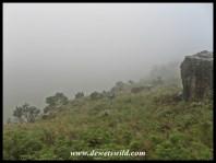 Waking to a heavy fog