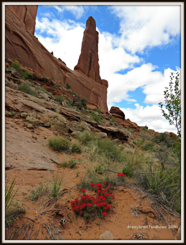 Flowers in Bloom Arches NP Moab, UT