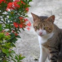 Tatapan itu pasti bisa bikin kucing2 cewek rontok hatinya