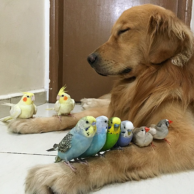 A_Dog_8_Birds_And_A_Hamster_Are_The_Most_Unusual_Best_Friends_Ever12
