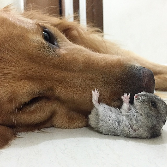 A_Dog_8_Birds_And_A_Hamster_Are_The_Most_Unusual_Best_Friends_Ever16