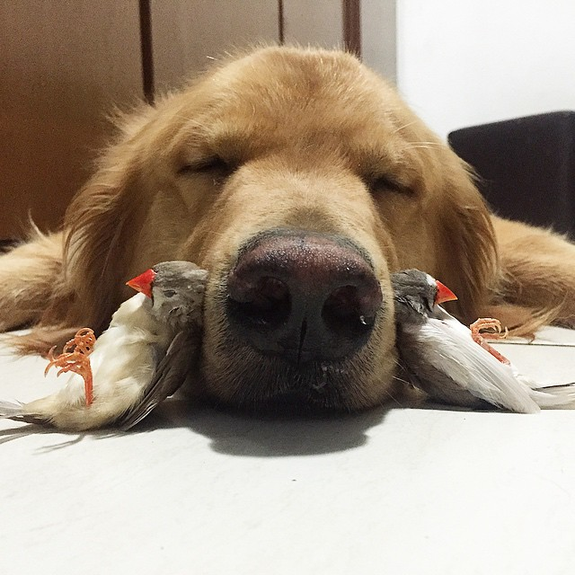 A_Dog_8_Birds_And_A_Hamster_Are_The_Most_Unusual_Best_Friends_Ever4