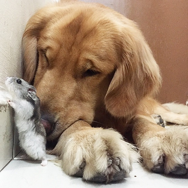 A_Dog_8_Birds_And_A_Hamster_Are_The_Most_Unusual_Best_Friends_Ever11
