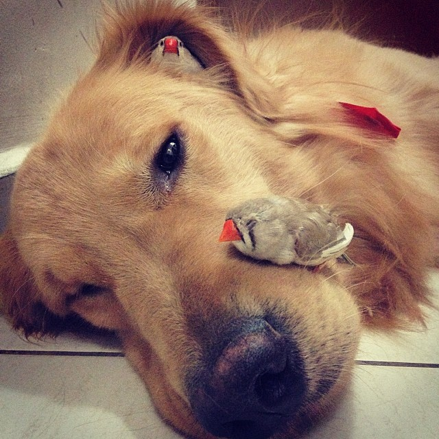 A_Dog_8_Birds_And_A_Hamster_Are_The_Most_Unusual_Best_Friends_Ever14