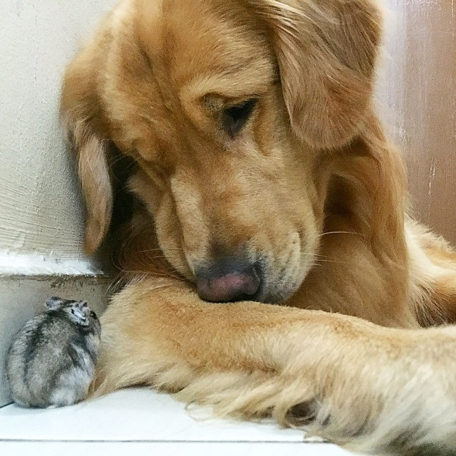 A_Dog_8_Birds_And_A_Hamster_Are_The_Most_Unusual_Best_Friends_Ever10