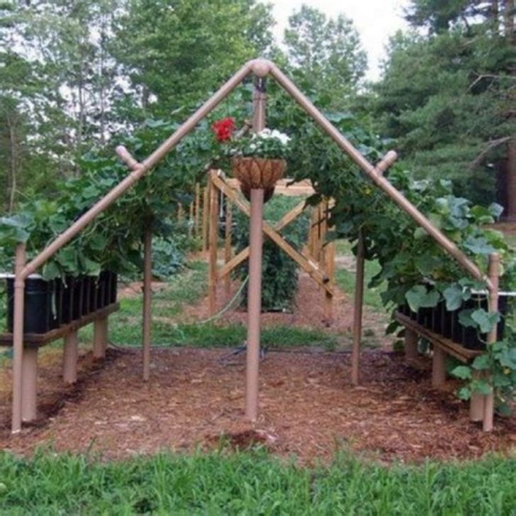 PVC Pipe Projects Trellis