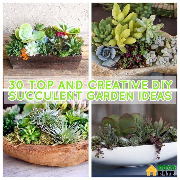 30 Top And Unique Diy Succulent Garden Design For Your Home