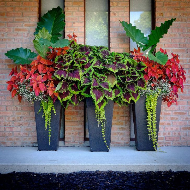 Front Porch With Ornamental Plants