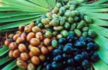 Saw Palmetto Berries