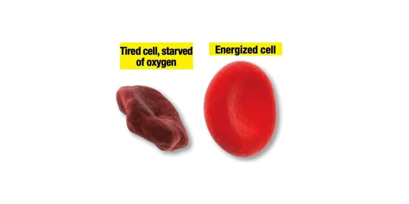 Blood Flow 7 Supplement-Blood Cells