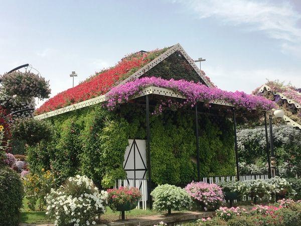 Dubai Miracle Garden: um jardim no meio do deserto de Dubai - Dez Mil Milhas