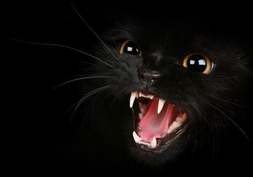 Blestemul pisicii negre