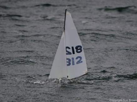 suebrowncatsails-df65-7