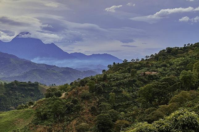 Kolumbianische Kaffeelandschaft