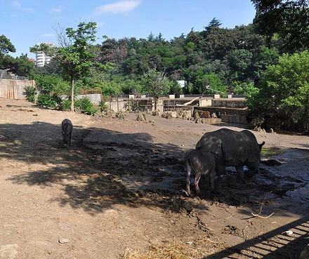 tbilisi_-x-zoo_Sunday_after_flood
