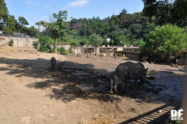 tbilisi_zoo_Sunday_after_flood