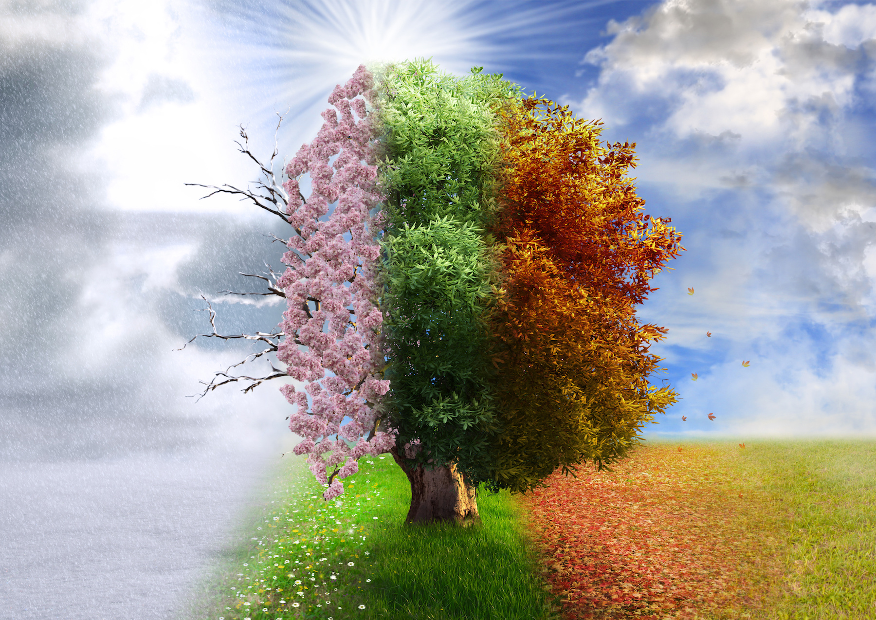 Your Trees Through The Seasons