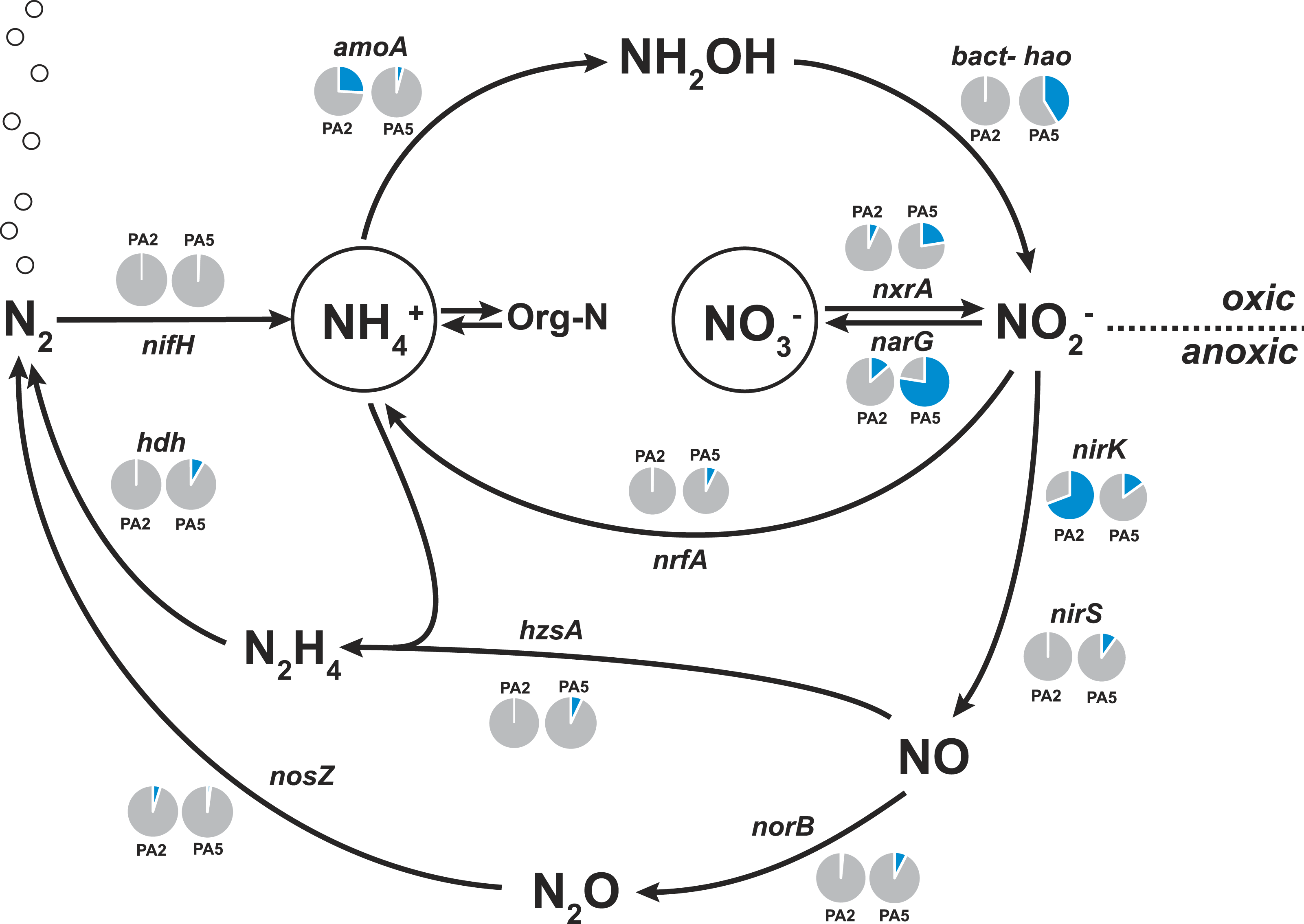 Metagenomicysis Of Nitrogen And Methane Cycling In