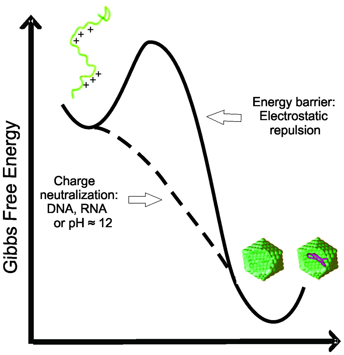 Charge Neutralization As The Major Factor For The Assembly