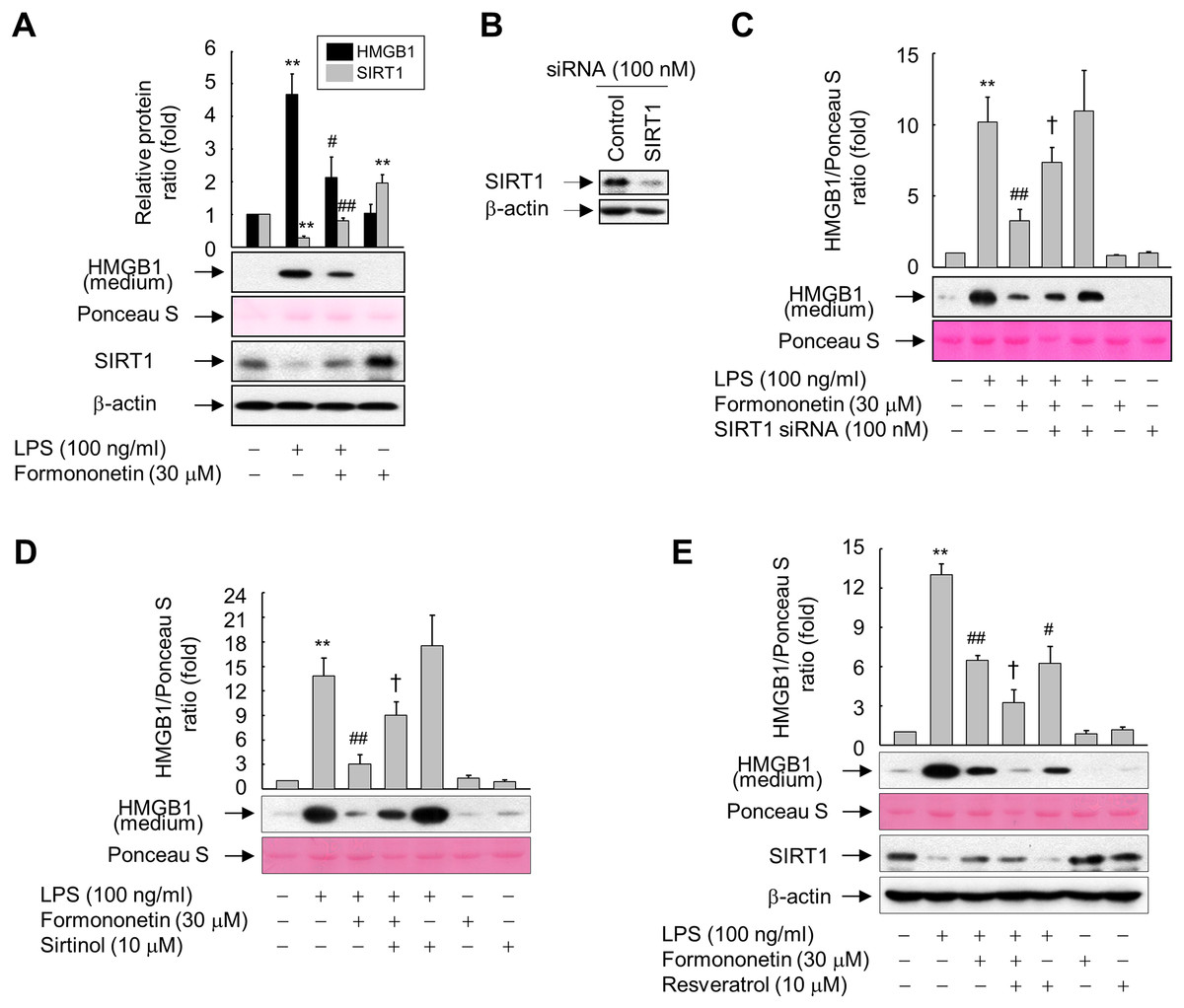 Formononetin Inhibits Lipopolysaccharide Induced Release Of High Mobility Group Box 1 By