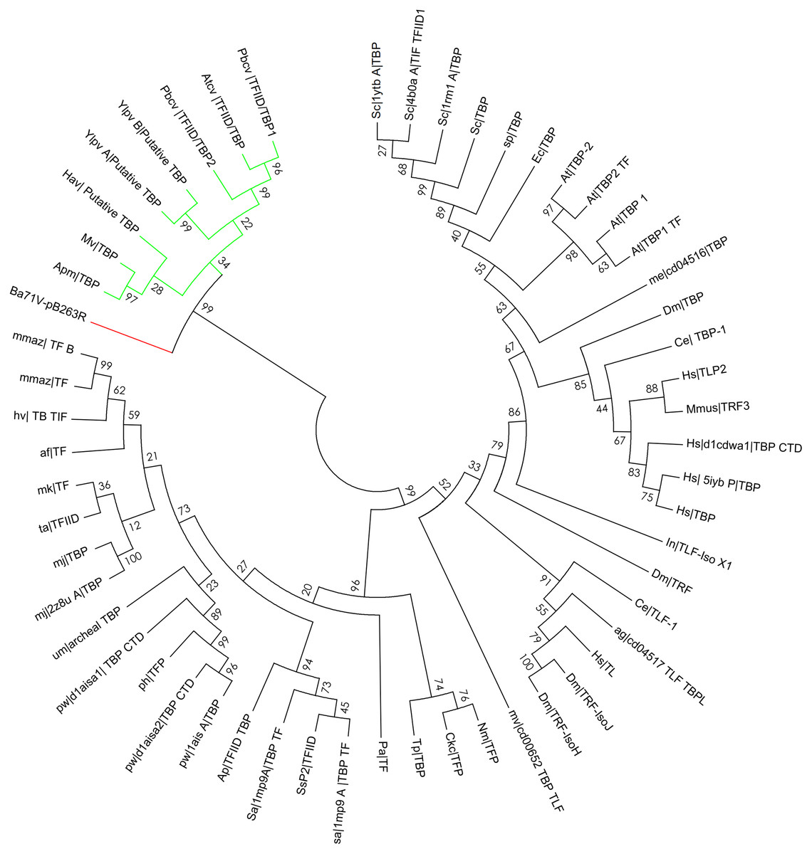 In Silico Structural And Functional Prediction Of African Swine Fever Virus Protein B263r