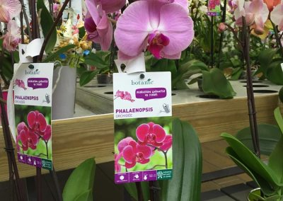 Botanic – plante d'intérieur