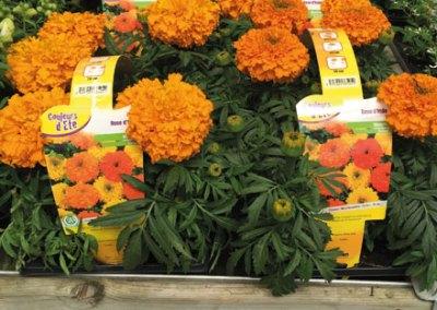 Horticulture Soupe – Etiquettes – Poignées