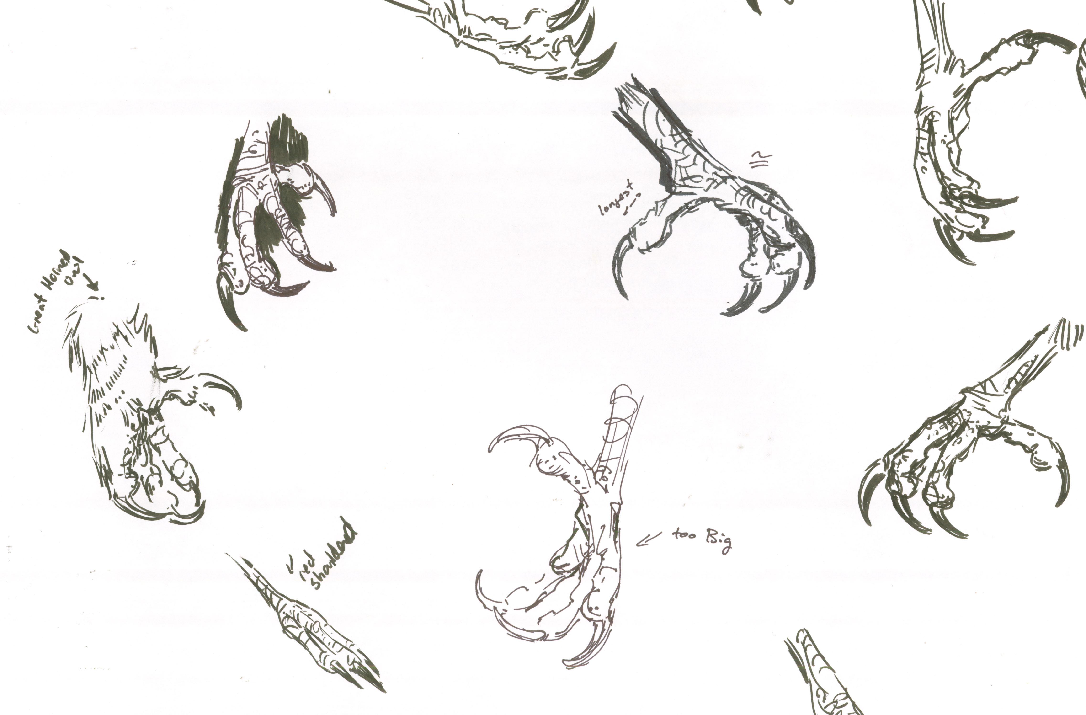 Eagle Cartoon Drawings