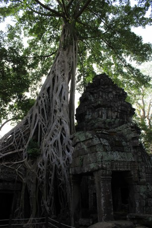 The roots slither down Angkor Thom's grey ruins like serpents.