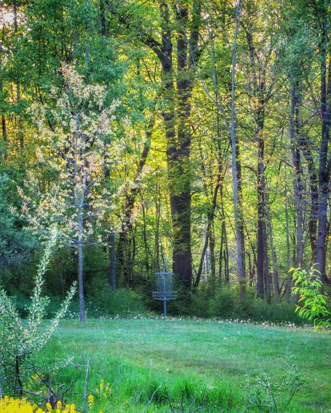 Disc golf basket in grove