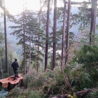 Logging the Walbran Valley: An Open Letter to Teal Jones
