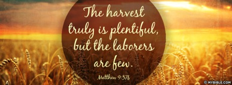 Image result for the harvest is plentiful but the laborers are few