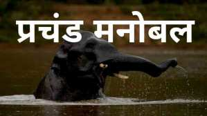 Read more about the article प्रचंड मनोबल- हिन्दी कहानी