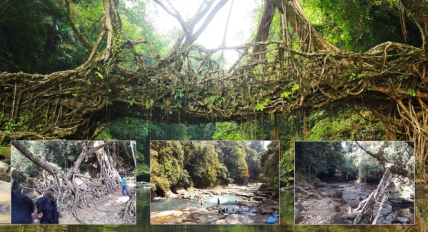 Root-Bridge2