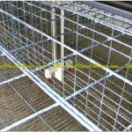 Konstruksi Starter dan Grower - Konstruksi Baja Breeding Farm 2 Lantai