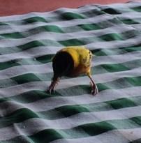 Tiny vibrant birds all around