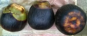 Palmayra palm