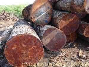 mahogany-logs-300x225