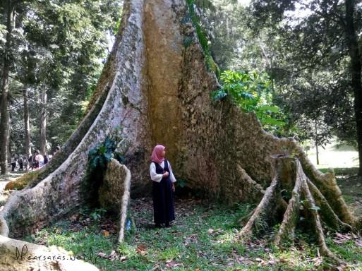Berasa hobbit. Kali ini saya yang minta Puspa buat jadi model, sebagai perbandingan betapa gedenya akar papan pohon ini.