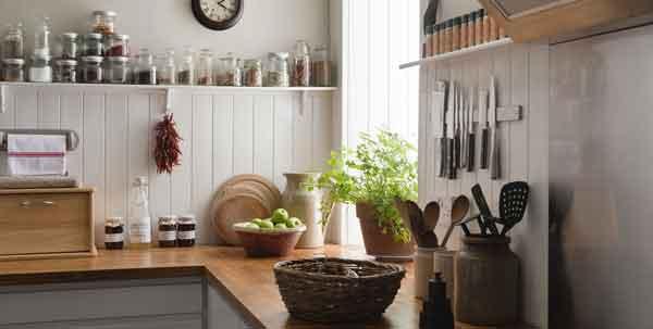 plant in kitchen