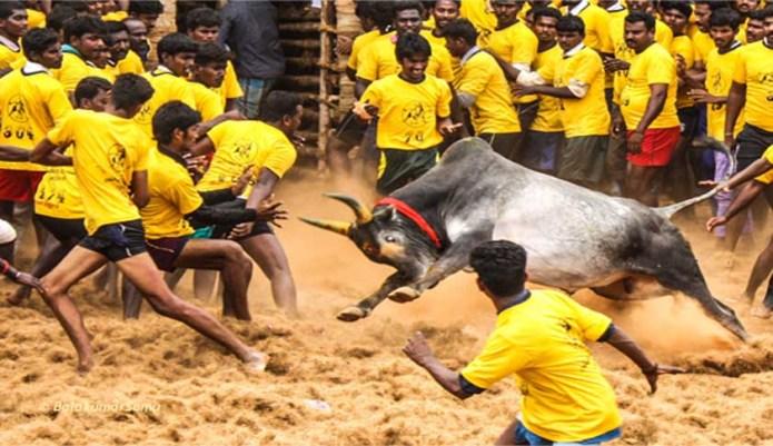 அன்று ஜல்லிக்கட்டை தடை செய்துவிட்டு… இன்று பார்வையிட வருவதா? ராகுலுக்கு எதிர்ப்பு! #GoBackRahul