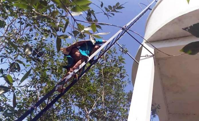 பெண் ஆட்சியர் மேற்கொண்ட சாகசம்: 115 அடி உயர நீர்த்தொட்டியில் ஏறி ஆய்வு!