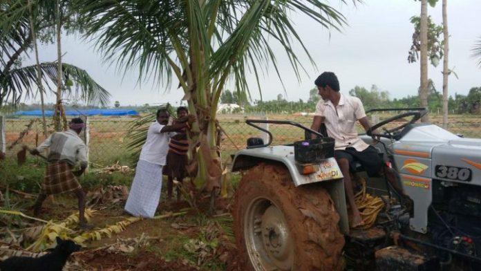 அறந்தாங்கி அருகே மேலப்பட்டு பகுதியில் கஜா புயலால் சாய்ந்த மரங்களை நிமித்தி உயர்கொடுக்கும் விவசாயி