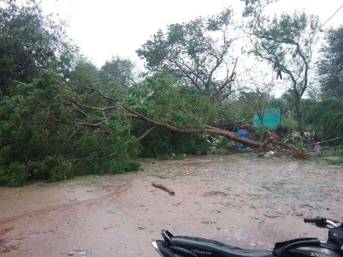புதுக்கோட்டை மாவட்டம் அறநதாங்கி பகுதியில் கஜா புயல் தாககம்